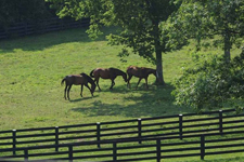 Mt. Brilliant Secondary 7.20.12 225 Transformed from cattle to horses, historic Mt. Brilliant Farm awash in restored elegance