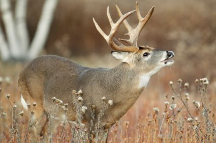 Ky archers set deer harvest record for fourth september for Ky fish and wildlife telecheck