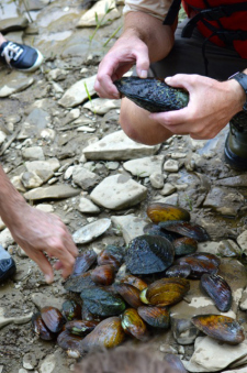 Sierra Club members gathered various species of mussels from the Licking River for Monte McGregor to identify (Photo By Andy Mead)