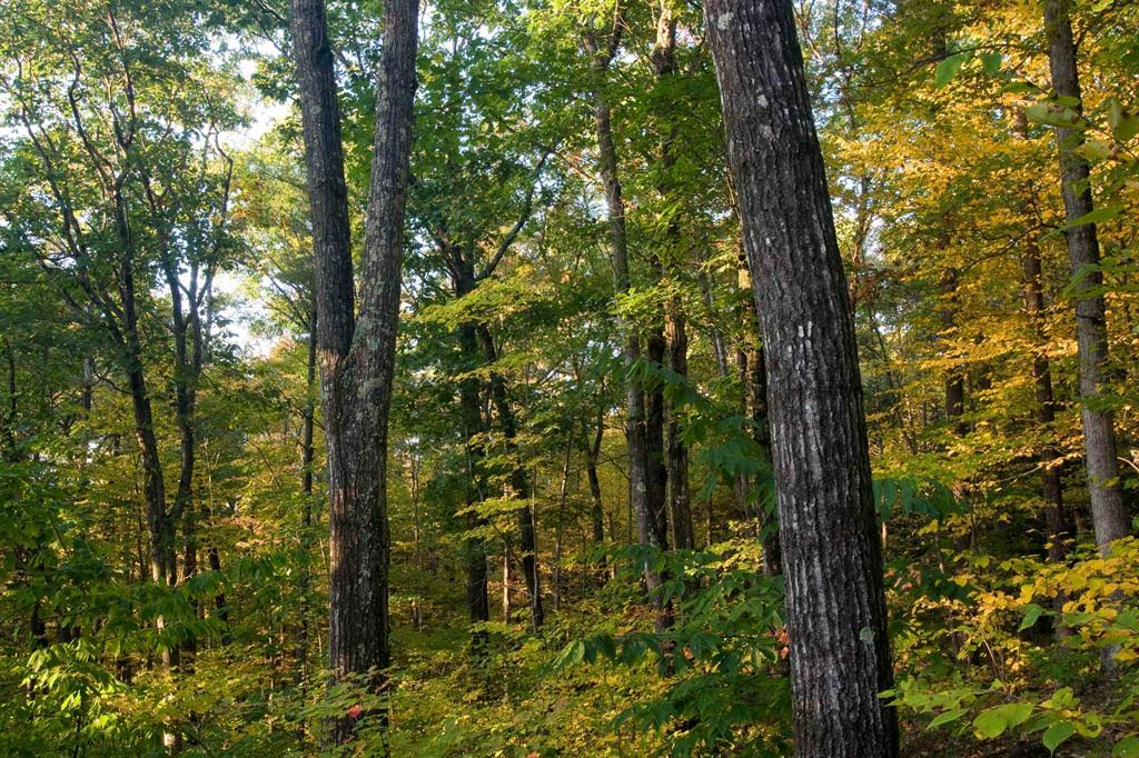 Seventy-five percent of Kentucky forests are composed of oak-hickory forest type, one of three predominate forest types across the state (Photo by Ben Kimball)