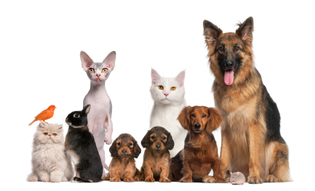 national pet day it s time to consider what pets do for quality