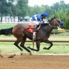 Ain't In No Hurry, age 7, wins first start. (Coady Photography)