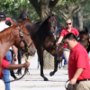 VinMar Farm announced Tuesday that it will offer a complete dispersal of its Thoroughbred holdings at Keeneland's 2016 September Yearling Sale, to be held Sept. 12-25, and November Breeding Stock Sale, which begins Nov. 8 (Keeneland Photo)