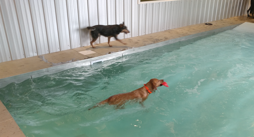 New 64 Acre Pet Resort Featuring Indoor Dog Park Pool Launches In
