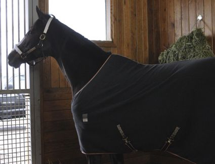 Rachel Alexandra returns home to continue recovery after birth