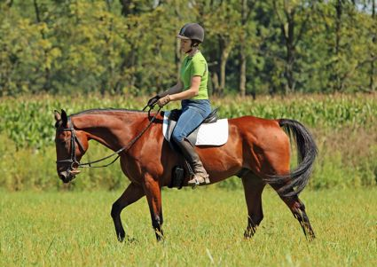 A superstar Standardbred at the track while pulling a sulky, Special Report has become a reliable riding horse and is an ambassador for the New Vocations retraining and adoption program (Photo courtesy of Shelley Johnson)