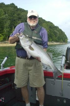 Anglers should anticipate much better striper fishing, and the return of larger fish, as Lake Cumberland recovers from a drawdown since 2007 to make repairs to Wolf Creek Dam. (Photo by John B. Lander)