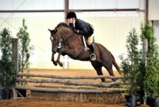 Considered too slow to continue racing, Christmas Trippi has excelled as show horse after being adopted through New Vocations (Photo courtesy of New Vocations)