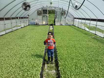 The next generation of Young farmers - Brian Young's son Christopher, at their Trimble County farm. (Photo provided)