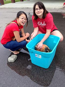 Rikako Sato and Lilli Hanik wash and scrub a country ham for a 4-H project. (Photo courtesy of Rikako Sato)