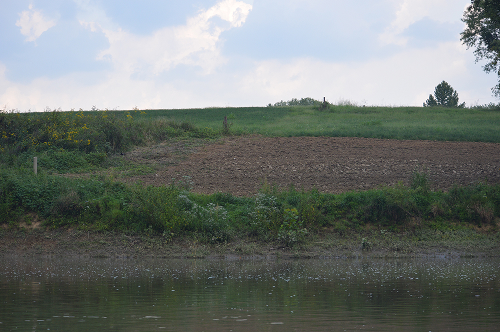 The reduction in acres plowed each year for tobacco has resulted in more land covered with grass, reducing the amount of sediment washing into the Licking River (Photo by Andy Mead)