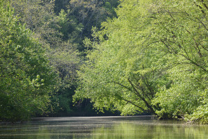In many places in Magoffin and Morgan counties, the Licking River is so narrow and the vegetation so lush that trees form a canopy over the water. (Photo By Andy Mead)