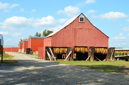 The Tobacco barn. (Bobbie Smith Bryant photos)