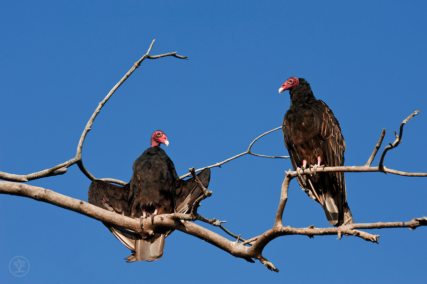 Vulture roosts are noisy and smelly, not something you want near your farmhouse, vacation cabin or barn (Photo Provided)