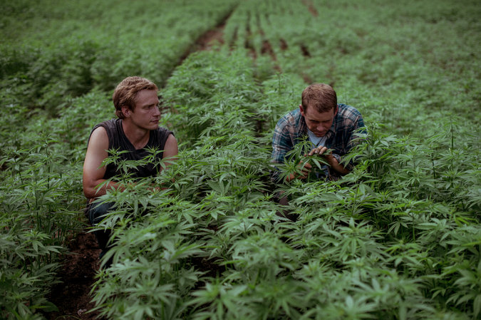 Nathan Hall, left, and Todd Howard hope industrial hemp helps revitalize the Central Appalachian economy (New York Times Photo by Mike Belleme from Rural Blog)
