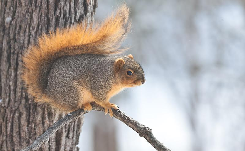 Art Lander's Outdoors: Don't forget the squirrels - Kentucky